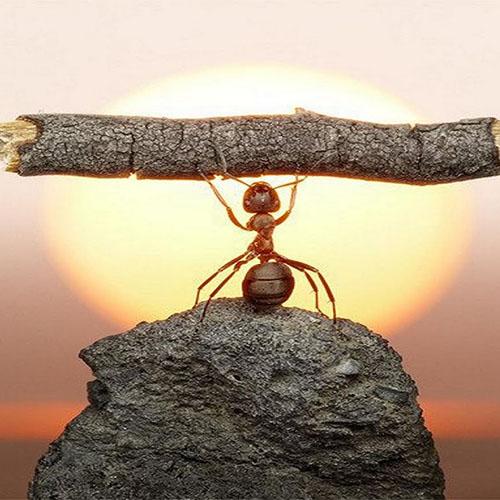 hardwork-ant